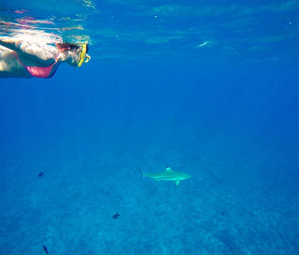 Snorkeling in Bora Bora with Black-tipped Reef Sharks and Lemon Sharks