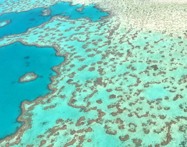 My Great Barrier Reef Experience in 15 Photos